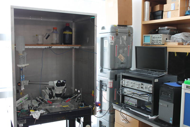 Two-Electrode Voltage Clamp Rig 1
